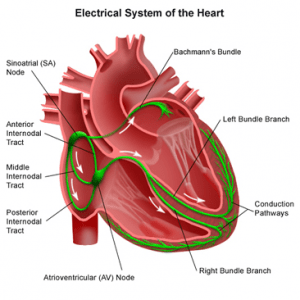 electrical system in the heart
